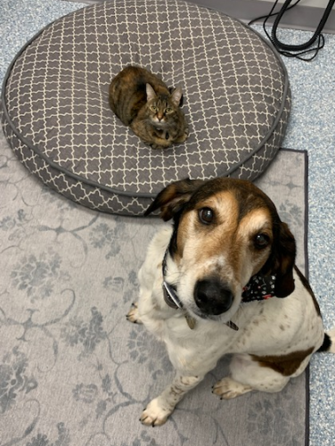 cat takes over dog bed (harley and bailey)